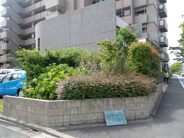 生垣刈込前の写真