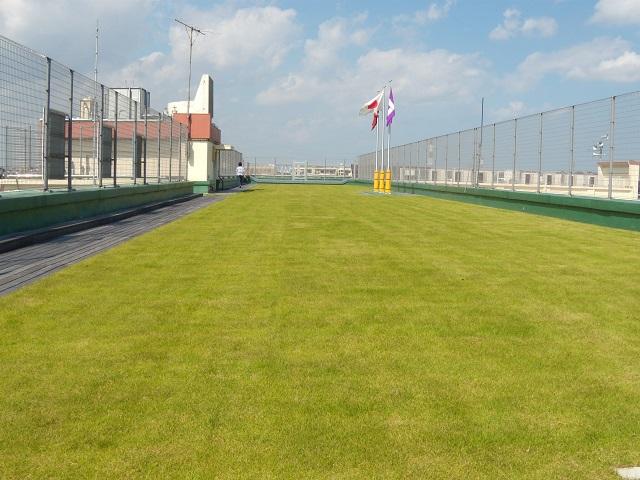 鎌倉小学校屋上緑化(芝生)工事の施工1年半後写真