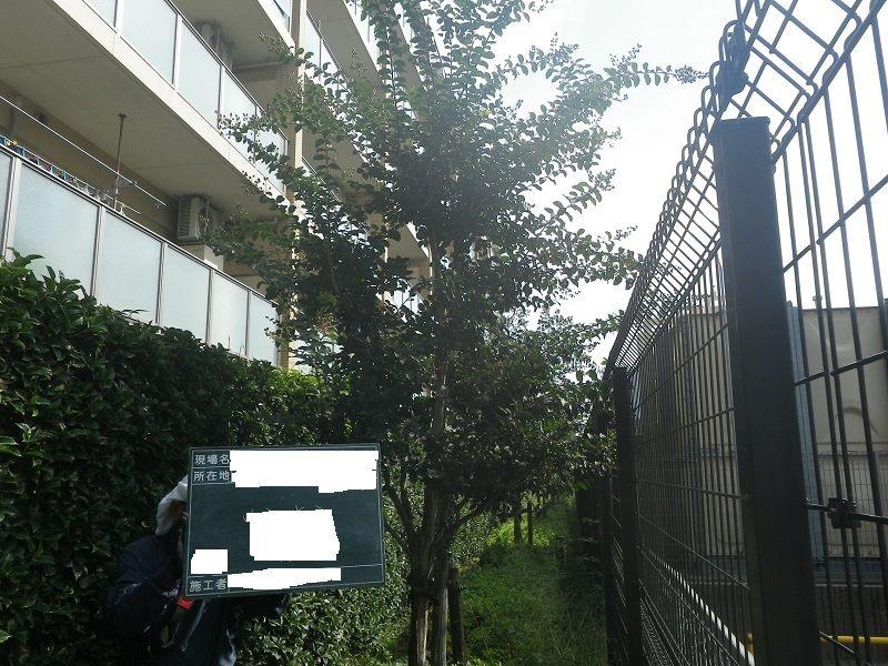 マンション緑地管理編