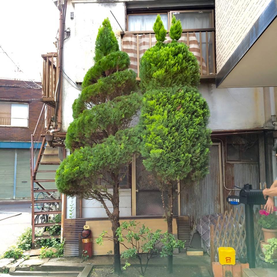 プライベートな植木の剪定をご紹介!