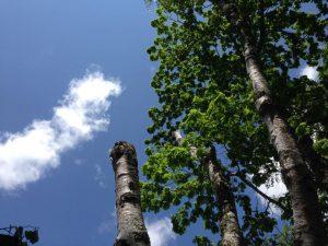 『空が近い。』 東京恵比寿、ビル屋上での作業……