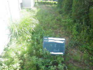 仲町台・金町・南砂のマンション緑地管理 開始