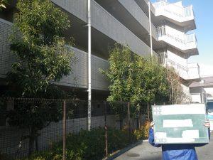 マンションの樹木剪定 施工前
