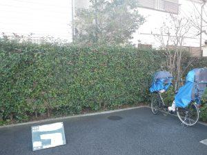 マンション生垣の刈り込み 施工前