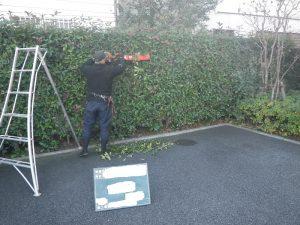 マンション生垣の刈り込み 作業の様子