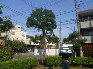 足立区、葛飾区、江戸川区 都立高校の樹木 お手入 後編