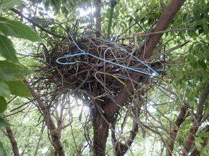 カラスの巣撤去(若干グロ注意)