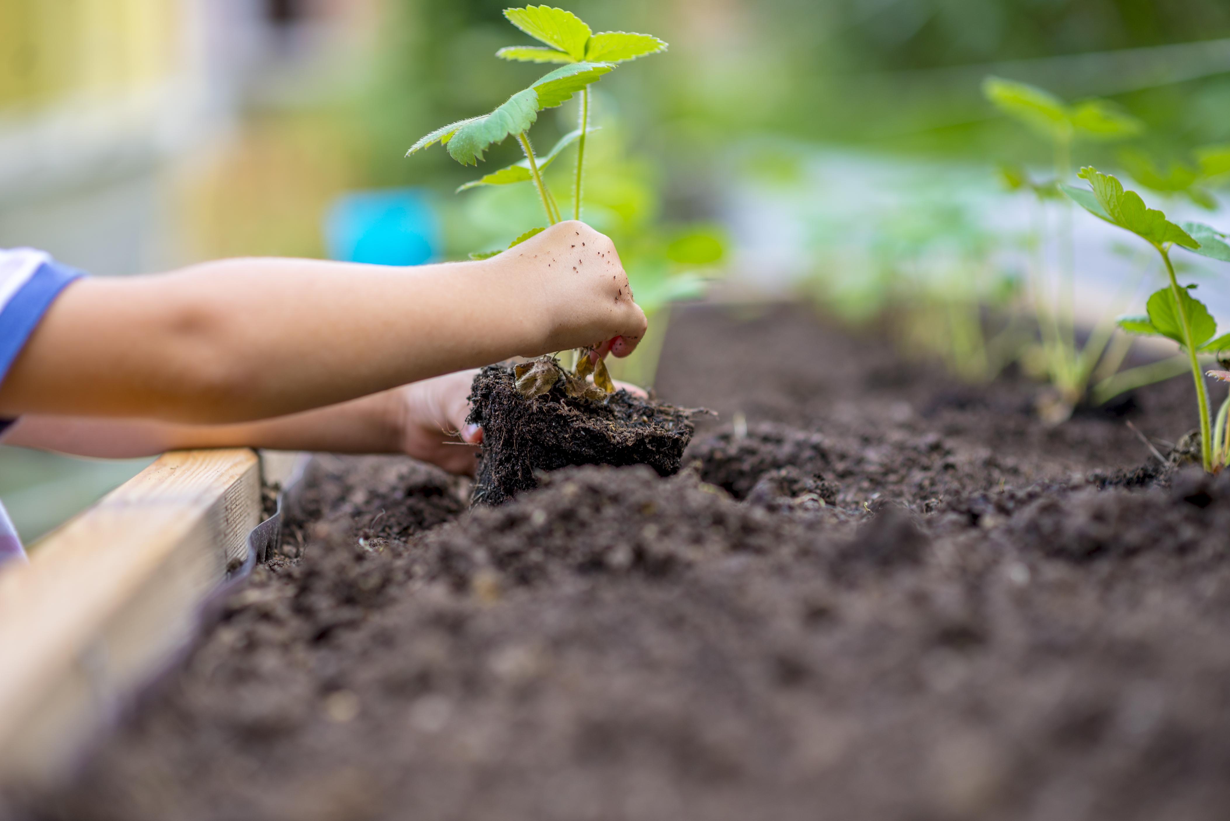 第三回 樹木をきれいで健康に保つために、必要なお手入れ『施肥』編
