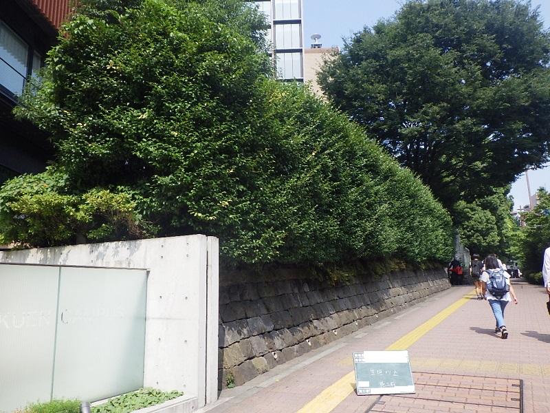中央大学 後楽園キャンパス編 低木と生垣の手入れ