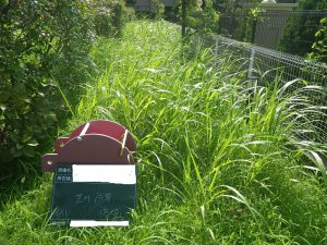 雑草さん勘弁して下さい。(TT)  雑草の繁殖力とその対策について