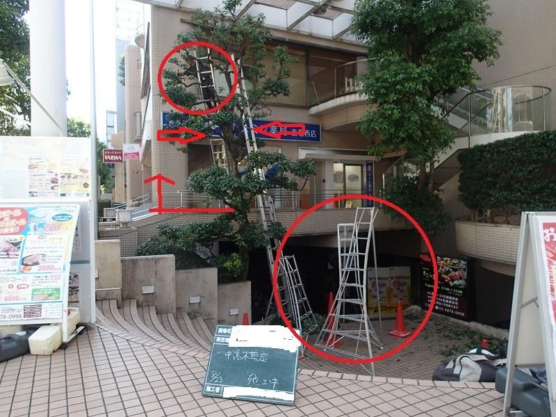 造園職人の仕事:大活躍の『梯子(はしご)』についてご紹介