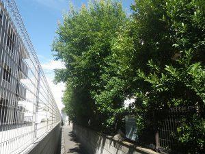 庭の樹木は1年でどれくらい伸びる?樹木剪定の参考として