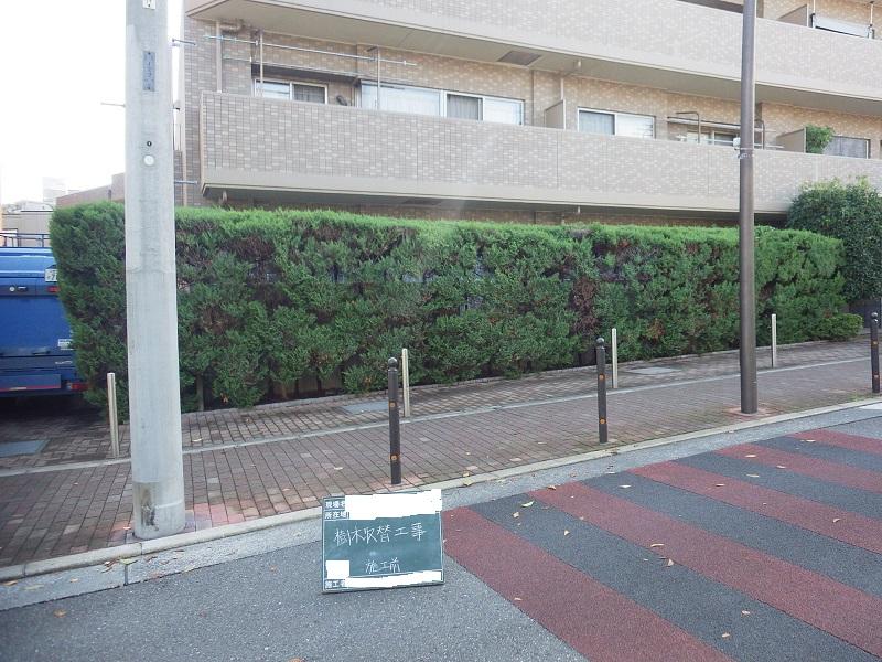 生垣取替工事1日目 ~樹木と生垣を撤去するまで~