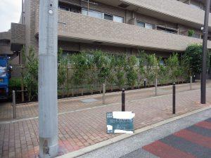 生垣取替工事最終日 ~樹木を植え付けて支柱に結束するまで~