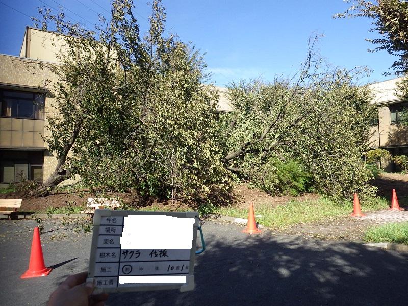 台風による倒木の処理1回目