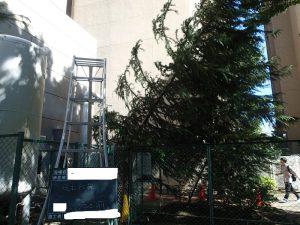 台風による倒木処理2回目