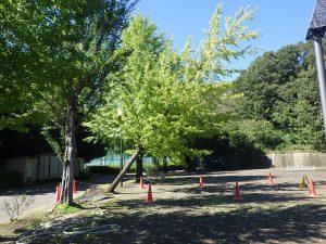 台風による倒木処理3回目