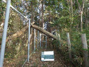 台風による倒木処理番外編