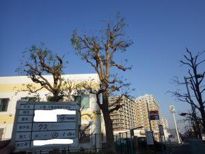 公園にある樹木の手入