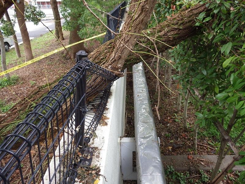 台風による倒木処理その2