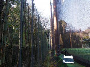 大学硬式野球場周辺の樹木を剪定
