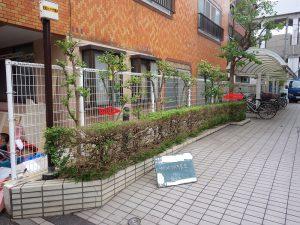 サザンカ、ツバキの剪定防除、低木に覆われた庭園灯の露出の例