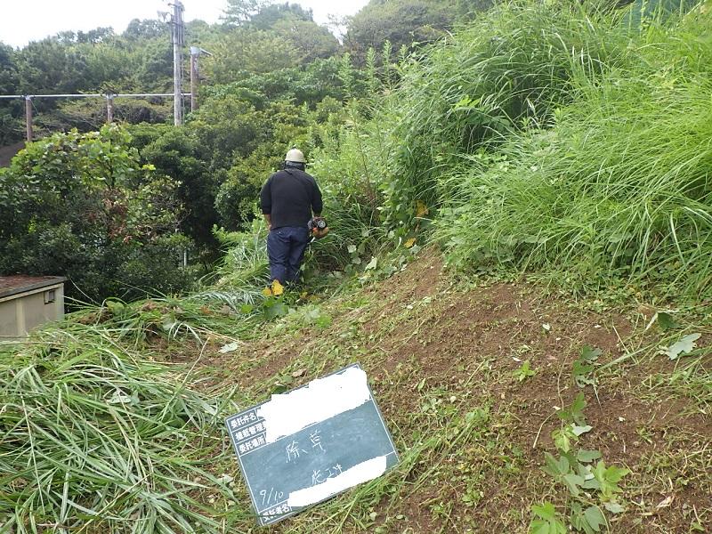 場所によって雑草の繁茂状況は差が出ます