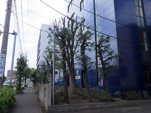 建物使用再開に伴う緑地整備